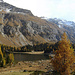 Herbst am Lägh da Cavloc