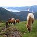 All'Alpe Pra di Cicogna.