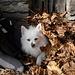 """Miky in versione """"autunnale"""" con coperta di foglie!"""