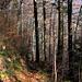 Abstieg durch den Wald. Eine rutschige Angelegenheit.