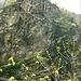 """<br />""""♬♪♩♬...Die Gedanken sind frei...♩♪♫♬""""<br /><br />(Deutsches Volkslied)<br /><br />(Milva):<br />[http://www.youtube.com/watch?v=8mLiXApfO8s]<br />_____________<br />_______<br /><br /><br />Über dem Felsen steht di 'Cappella S.Nicolao'.<br />(Vor tausend Jahren gab es diese Kapelle aber noch nicht.)<br /><br />__________<br />____"""