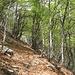 Abstieg durch lichten Wald