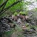 Abstieg über Treppen