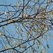 Frühling..... blauer Himmel inklusive