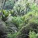 Typische Flora am Weg