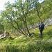 Im Abstieg durch das Rangeldalen. Die ersten Bäume (Birken) sind wieder erreicht.