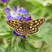 Farfalla II