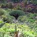 Subtropische Landschaft rund um den Drago