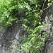 An sich eine stehende Pflanze, aber hier als Hängedekoration
