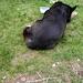 Billie molto stanca si riposa alla bocchetta Foscale