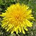 Farbtupfer in Form von zahlreichen Blumen, insbesondere Enziane, gab es viele