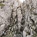 Das nasse Kamin kurz vor dem Gipfel (Schlüsselstelle)