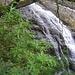 Wasserfall vor Rhododendron - mich erinnert das Bild an den Himalaya ...