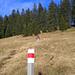Markierte Wege durch die gelben Wiesen oberhalb Amden