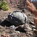 """Ein sogenanntes """"Teide-Ei"""", eine Lavakugel"""