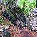 Die ersten harmlosen Felspassagen im Wald