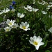 Blumenparadies Alp Sigel.