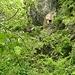 """<br />""""♩♫♬...Hanno detto che Franziska è stanca di pregare...♬♫♬""""<br /><br />(Fabrizio de André - 'Franziska')<br />[http://www.youtube.com/watch?v=OaRw-1snD2M]<br /><br />_________________________________<br /><br />Übersetzung (ungefähr):<br /><br />""""Es geht das Gerücht um, Franziska sei es müde geworden zu beten.""""<br /><br />_____________________<br />__________________________________________<br /><br />Der Zusammenhang von dem Foto mit dem Lied:<br /><br />Ich habe mir vorgestellt, <br />Franziska sei eine schöne, <br />aber fromme, fast schon heilige Eremitin gewesen, <br />die in diesem Felsenhaus wohnte. <br /><br />Und jetzt machen sich die jungen Burschen im Tal Hoffnungen, <br />weil sie gehört haben, <br />Franziska sei es müde geworden zu beten.<br />____________________________________<br />____________"""