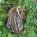Piccolo cerbiatto