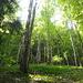 naturbelassene Wälder