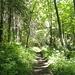 Die dichten Wälder sind gerade für Hitzetage zu empfehlen.