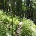 Auch der Abstieg zurück nach Le Theusseret erfolgt meist durch dichte Wälder.