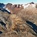 Blick ins Chelenalptal mit den in 2006 aktuellen Gletscherständen!