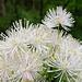 Was Botanisches....aber was? ;-)