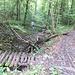 Wegkreuzung Linderweg und Trampelpfad Ost. Der Jogger und ich sind auf dem Linderweg.