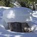 Schneesteinpilz im Wald unterhalb Brischeru (Boletus nivalis). Hut essbar, aber nicht zum Dörren geeignet!