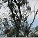 Cuiburi de cormorani