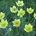 nove macchie gialle........