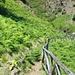 Abzweigung ins Vallone del Castagno. Sentiero delle felci (Farne).