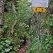 Hier gehts hinunter zum Oberen Brüggli. Der Weg ist nicht mehr unterhalten, wird auch nur noch selten begangen.