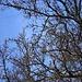 Baum beim Abstieg