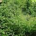 <br />Nein, das ist nicht NEBEN dem Weg. Das IST der Weg.<br />______________<br /><br />Der normale Weg über die Rampe hinab. Zurück nach Dongio<br />________<br /><br />(Linda Smith - Back in the Woods)<br />[http://www.youtube.com/watch?v=57cQWGOPWlU]<br /><br />☛☞☛☞➥➦➧➧➧➧➽➼➺➭➮➯➫➬➵➳➽➼➺➻➸⤍⇝⟿⟿<br />_________________<br />_________
