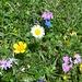 Blumenmix mit Artenvielfalt.
