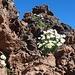 Wetter, Blumen und Fels - wie wir es lieben