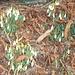 Der Frühling meldet sich erst zaghaft