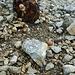 So viele Schnecken habe ich noch auf keinem Berg getroffen, die alle nur ein Ziel zu haben schienen - den Pfaffenstein zu besteigen!