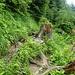 Steiler und durch die Nässe sehr rutschiger Abstieg ins Tal