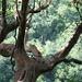 Urwaldbäume beim Abstieg vom Casa del Monte