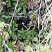 """Die Schlange hat sich in diese Höhle zurückgezogen. Sie ist zwischen 40 cm und 60 cm lang und ganz schwarz (ein """"Schwärzling""""). Aufgrund der Höhenlage könnte es sich um eine Kreuzotter (Vipera berus) handeln. Die einzelne Schuppenreihe unter dem Auge (in der Mitte des Bildes zu erkennen) deutet jedoch auf eine ungiftige Schlange hin. Daher könnte es sich auch um eine Ringelnatter (Natrix natrix) handeln."""