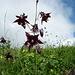 Akalei und zahlreiche andere Blumen erfreuen das Auge