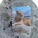 Il nuovo libro di vetta della cima di Aquila