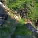 oberhalb  von Stellinu: Reste der Asperi Suone ?