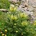 Spikes I (Flora)