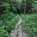 der Weg hinunter zum Ausgangspunkt. Von der Nesselbodenröti durch das Täli bei Zwischenberg