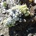 Pflanzen am Blauberg – der kann sie benennen?