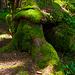Feucht ist`s im Sattelwald